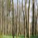 Frühlingszauberwald