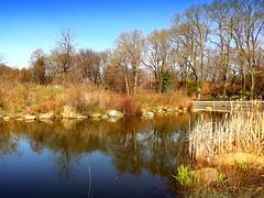 Spring on the Lake. Teardrop Island