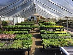 The LWTech Spring Plant Sale is less than a week away!  April 28-29 & May 5-6 from 9am-3pm.  . . . #lwtech #thelwtech #lakewashingtoninstituteoftechnology #lakewashingtontech #spring #ReadySetGrow #springplantsale #plantsale #plants #kirkland #pnw #seattl