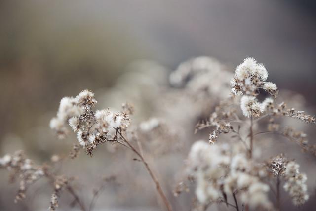 Floralistic