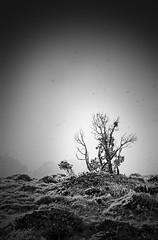 mercredi26-avril-1400m-dans-les-Pyrennées-2500px