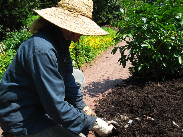 Newspaper Mulching in the Shakespeare Garden