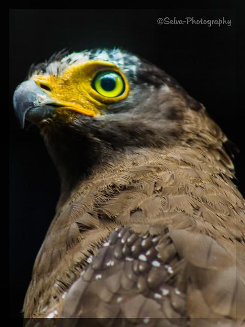 Eagle Look
