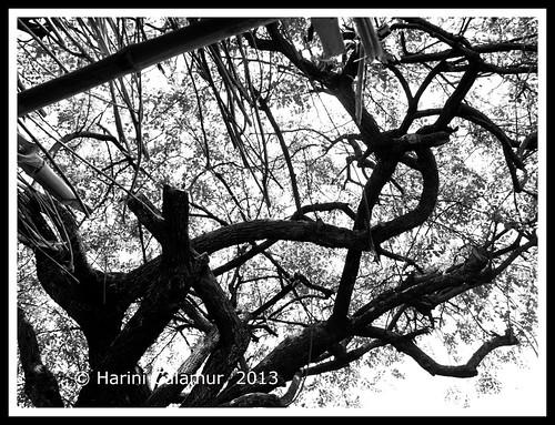 interlocking branches copy