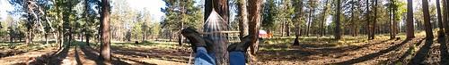arizona hammock mogollonrim