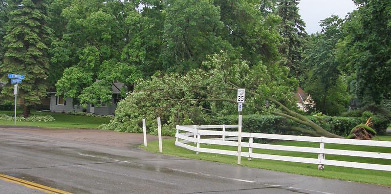 tree-down2