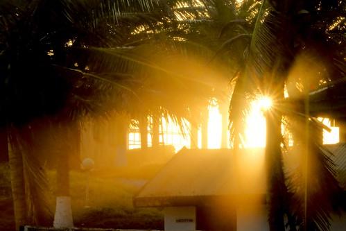 africa sunset palm ghana greater accra nextdoor teshie paulinuk99999 sal70400g