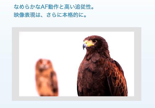 スクリーンショット 2013-07-25 11.11.36