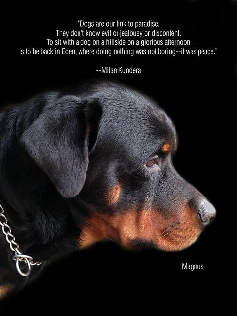 Magnus Kundera Poster