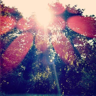 Here comes the #sun #trees #newhampshire