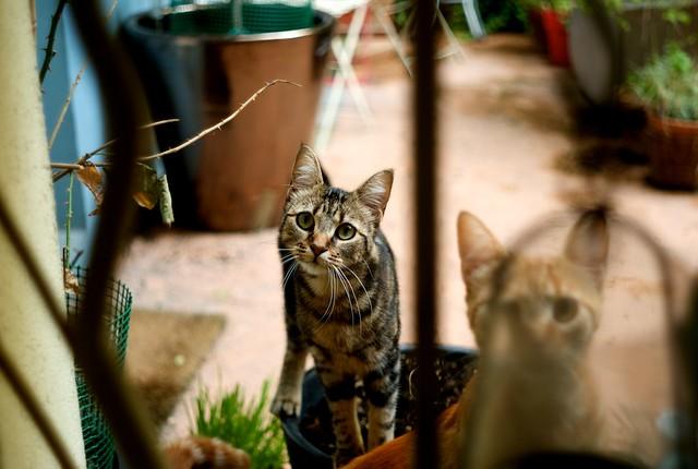 アパートの中庭にいる猫。にゃあにゃあ。