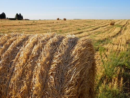 amarillo campo paja fardo ovillo paisajerural serranillosdelvalle