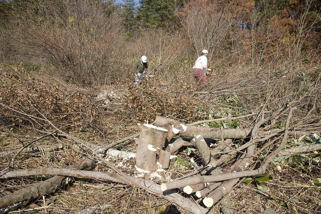1班の樹木伐採も順調に進んでいる.