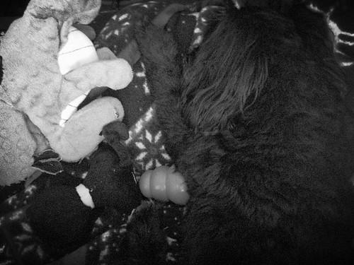 B&W Monty napping