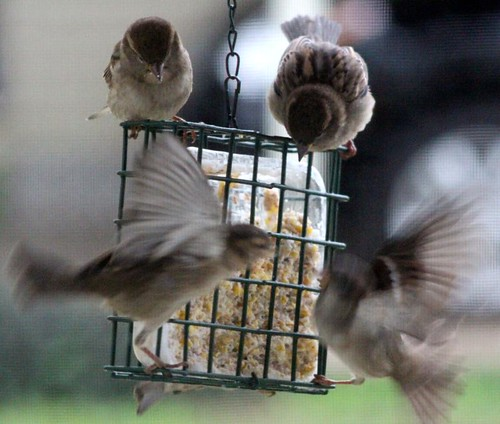 birdssuet2-9