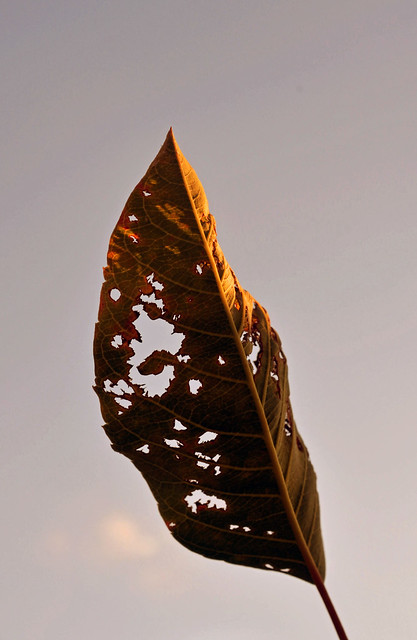 Spirit, photograph by Sara Muskulus, 2013. BBG class: The Magic Hour: Photography at Dusk.