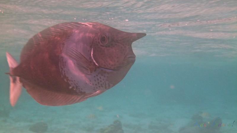 Maldives 125