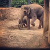 The baby elephant is so cuuuute!