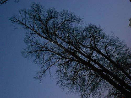 одно дерево мин