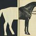 happyYEARofTHEhorse by anthonyzinonos
