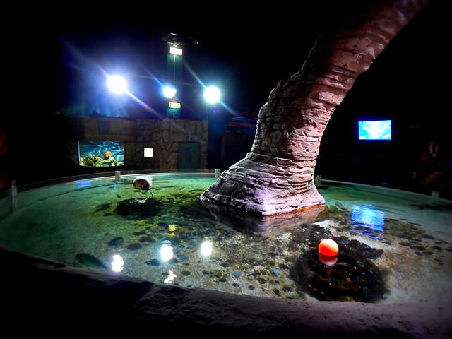sealife aquarium val d europe flickr photo