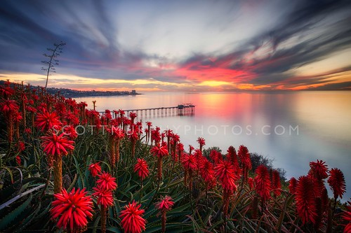 ocean california flowers sunset beach landscape dawn pier day sandiego cloudy lajolla lajollashores scripps