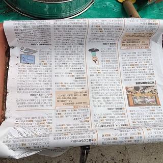 土をかぶせたあと、新聞紙。