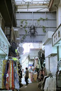 むつみ橋通りのクワガタ / stag beetle at Mutsumibashidori street