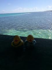 Ducks-472