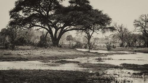 trees bäume river fluss 2008 botswana anymotion africa afrika animal animals tiere nature reisen travel wildlife khwairiver moremigamereserve okavangodelta landscape landschaft landschaftsaufnahmen bw blackandwhite sw