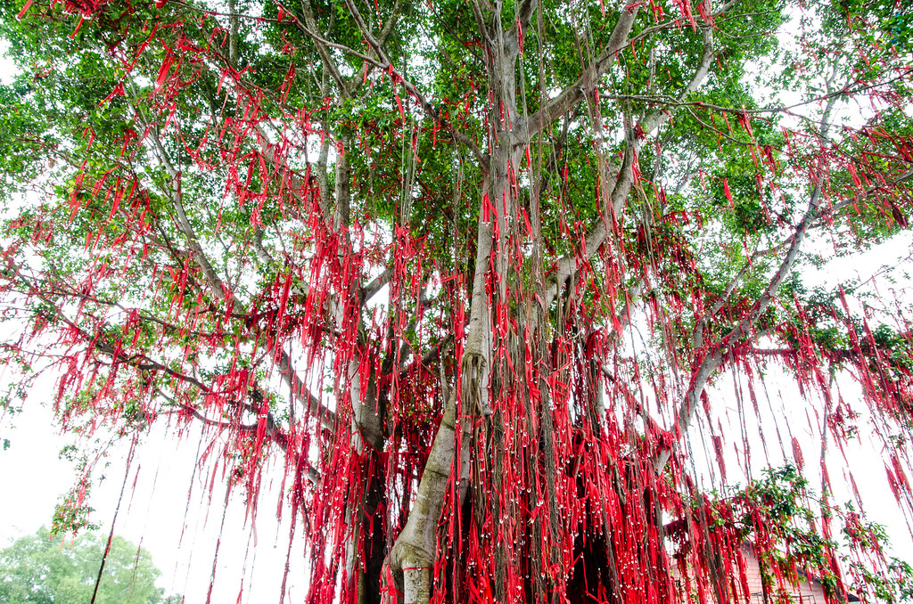 Wishing tree at Pantai Redang Beach, Sekinchan