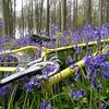 #Bluebells looking good in #angmeringpark today ●● ●● #southdowns #southdownsway #sdnpa #sussexmtb @sdnpa #ig_sussex #westsussex #worthing ●● @intergalacticsurlybikes @surlysociety @surlybikesuk #surly #icecreamtruck #ICT #fatbike_29plus_life #fatbike #fa