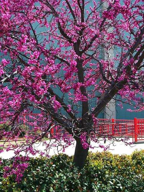 6616 Redbud Tree, Fujifilm FinePix S5000