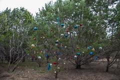Chistmas Cedar - O.P. Schnabel Park - San Antonio - Texas - 18 December 2016