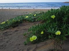 taiwan 台灣 tamsui danshui 淡水 newtaipei 新北 pacificocean 太平洋