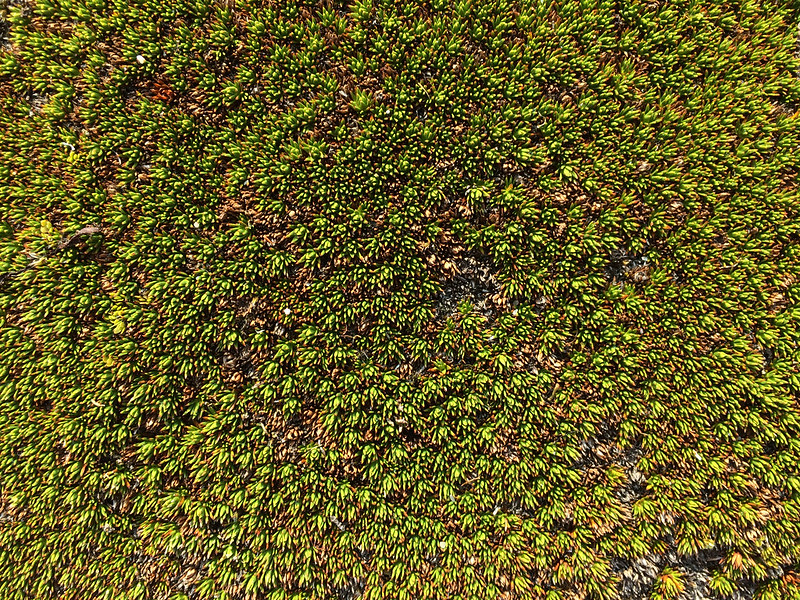 green-plant-tasmania