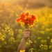 5/21 Spring is here! by Nathalie Le Bris