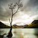 Lone Tree Buttermere by Mark Lindstrom