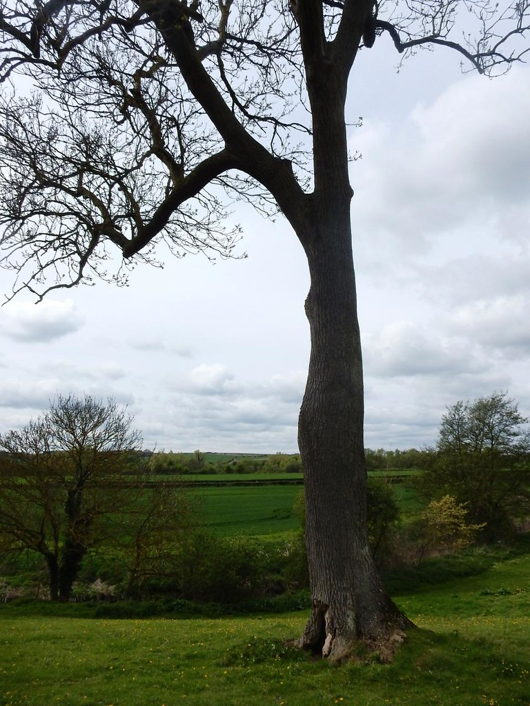 Tree Great Chesterford to Newport