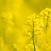 yellow - Olympus OM-D E-M1 by Andreas Voegele
