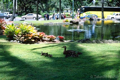 木陰でゆっくり / Relaxation at under a tree
