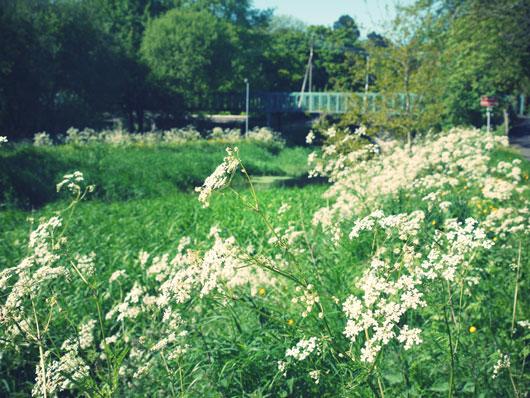 sun-florals5