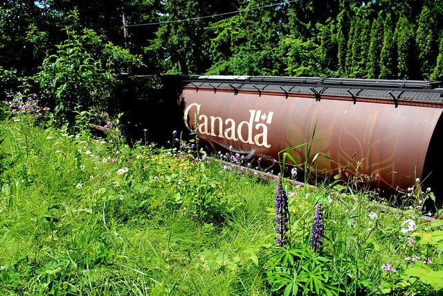 Happy Canada Day!* (SRY Rail Link Train Canada Car) | Flickr - Photo ...
