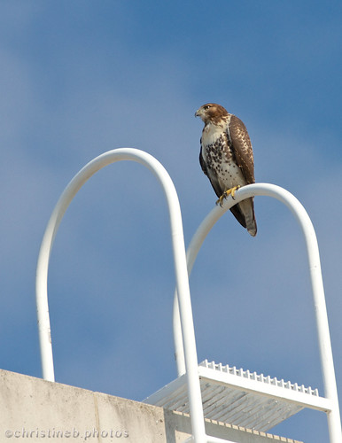 Dfemale atop Bartels Hall2 by ccb5 19 July 2013