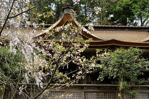吉野:奥千本〜金峯神社(2013.4.9)