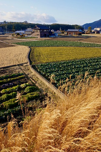 house field japan countryside sony cabbage 日本 家 畑 キャベツ 田舎 apsc e18200mmf3563oss nex7 sel18200le ©jakejung gettyimagesjapan13q3