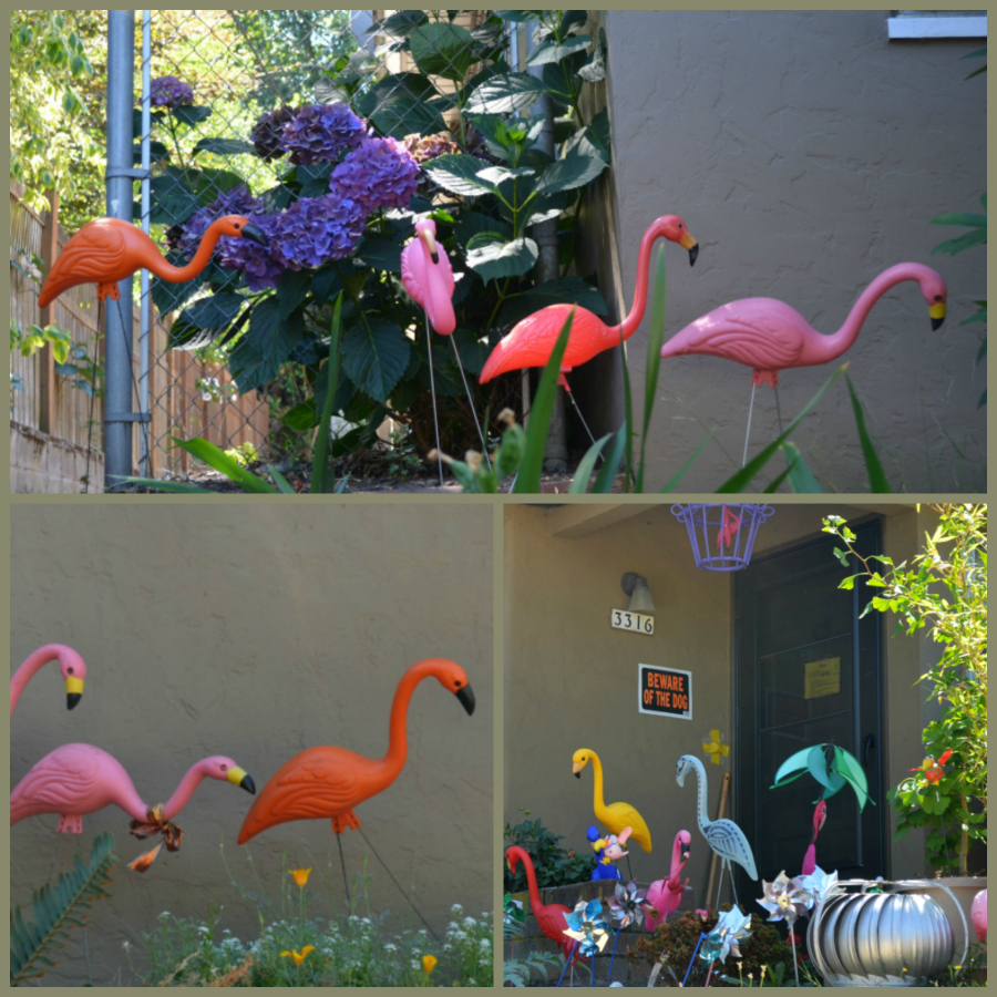 flamingos PicMonkey Collage