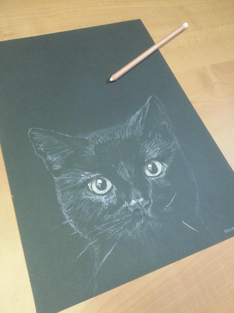 gato pretooo