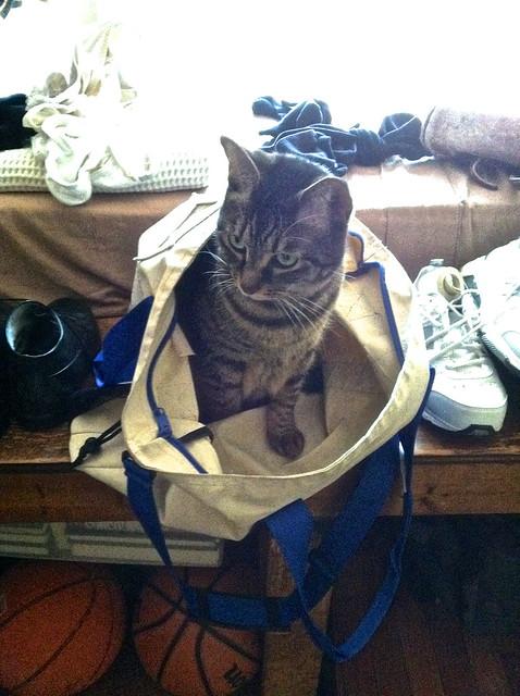 bella checks out the gym bag