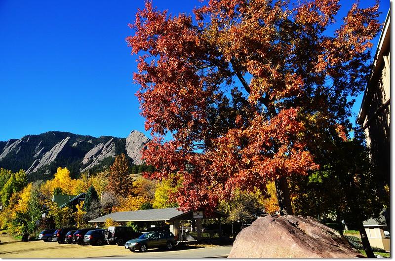 Oak(橡、櫟) in Fall, Chautauqua, Boulder 6